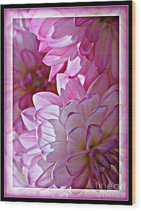 Sunlight Through Pink Dahlias Wood Print by Carol Groenen