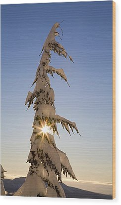 Sunlight Through Snow-covered Tree Wood Print by Craig Tuttle