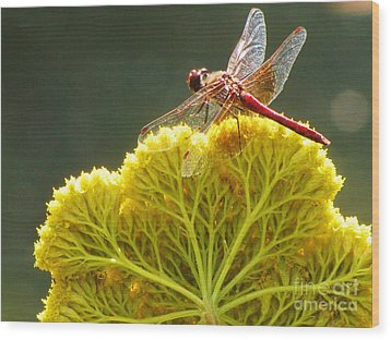 Wood Print featuring the photograph Sunlit Dragonfly On Yellow Yarrow by Michele Penner