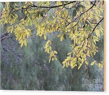 Sunlit Tree Wood Print by Tammy Herrin