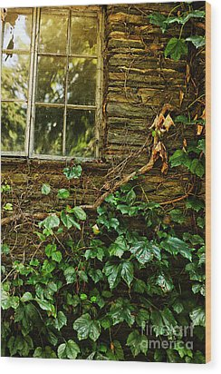 Sunlit Window And Grapevines Wood Print by HD Connelly