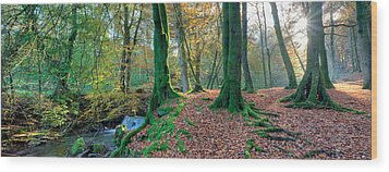 Sunlit Woodland, Birks O'aberfeldy, Perthshire Wood Print by Kathy Collins