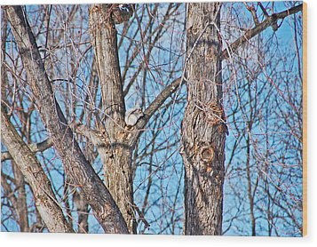Sunning In The Tree Wood Print by Aimee L Maher Photography and Art Visit ALMGallerydotcom