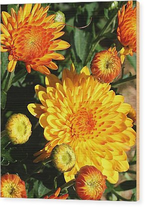 Sunning Mums Wood Print by Bruce Bley