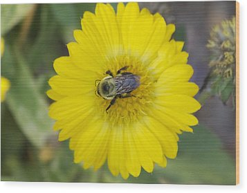 Sunny Bumblebee Wood Print by Michel DesRoches