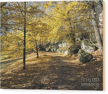 Sunny Day In The Autumn Park Wood Print by Michal Boubin