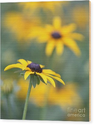 Sunny Flower Wood Print by Marilyn West