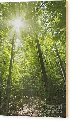 Sunny Forest Path Wood Print by Elena Elisseeva