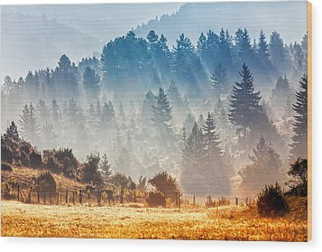 Sunny Morning Wood Print by Evgeni Dinev