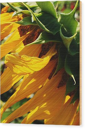 Sunny Times Wood Print by Bruce Bley