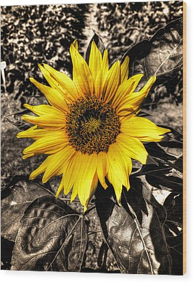 Sunny With A Chance Of Black And White Wood Print by Andre Faubert