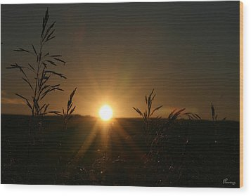 Sunrise And Spiderwebs Wood Print by Andrea Lawrence