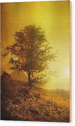 Sunrise Flare Wood Print by Svetlana Sewell