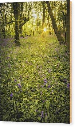 Sunrise In Bluebell Woods Wood Print by Amanda Elwell