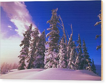 Sunrise Over Snow-covered Pine Trees Wood Print by Natural Selection Craig Tuttle