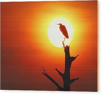 Sunrise Sentinel Wood Print by Jessie Dickson