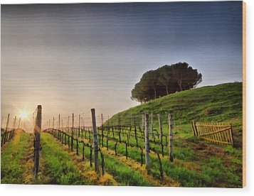 Sunrise Through The Vineyards Wood Print by Matteo Zonta