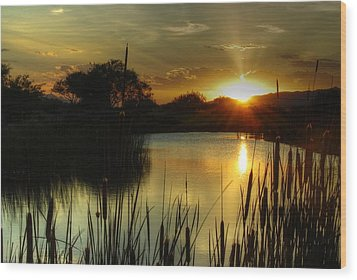Sunset And Cattails Wood Print by Tam Ryan