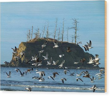 Wood Print featuring the photograph Sunset Bay Scape And Gulls by Cindy Wright