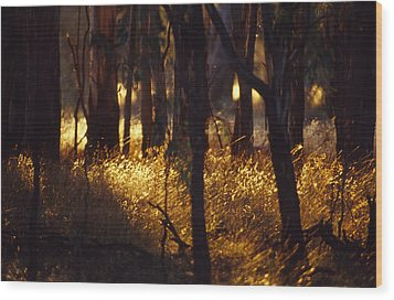 Sunset Falls Over Seeding Grasses Wood Print by Jason Edwards