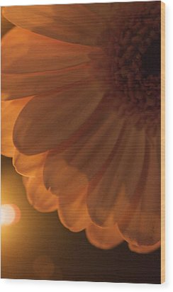 Wood Print featuring the photograph Sunset Flower by JM Photography