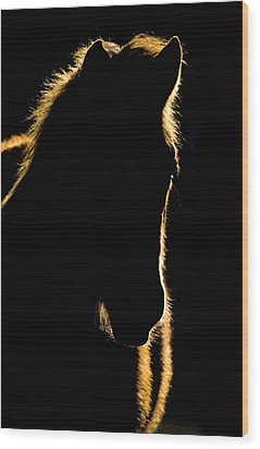 Sunset Horse Silhouette Canada Wood Print by Mark Duffy