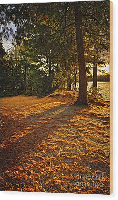 Sunset In Woods At Lake Shore Wood Print by Elena Elisseeva