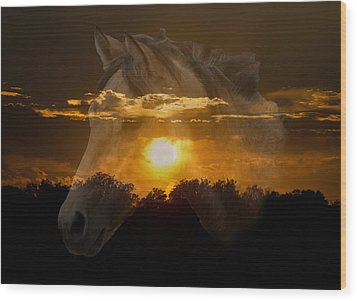 Sunset Silhouette Wood Print by Lisa Moore