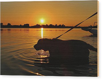 Sunset Swim Wood Print by Alexander Spahn