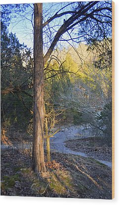 Sunset Tree Wood Print by Marty Koch
