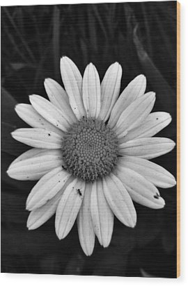 Wood Print featuring the photograph Sunshine by Janice Spivey