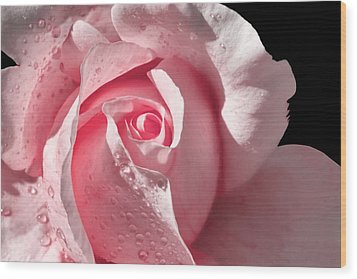 Supple Pink Rose Dipped In Dew Wood Print by Tracie Kaska