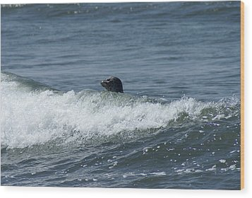 Surfing Seal Wood Print