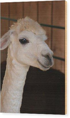 Wood Print featuring the photograph Suri Alpaca Number 1 by Paula Tohline Calhoun
