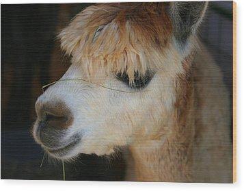 Wood Print featuring the photograph Suri Alpaca Number 5 by Paula Tohline Calhoun