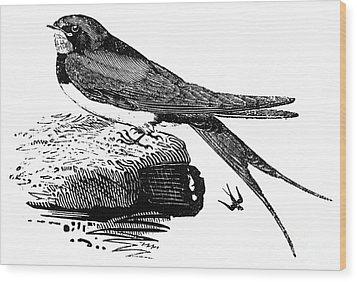 Swallow, C1800 Wood Print by Granger