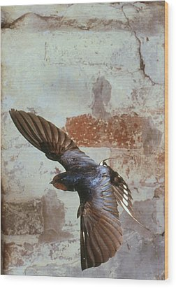 Swallow In Flight Wood Print by Andy Harmer