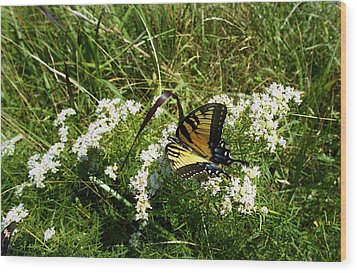 Swallow Tail  Wood Print by Skip Willits