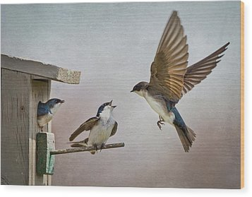 Swallows At Birdhouse Wood Print by Betty Wiley