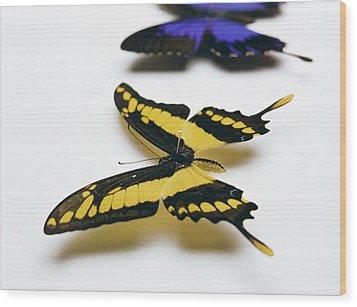 Swallowtail Butterflies Wood Print by Lawrence Lawry