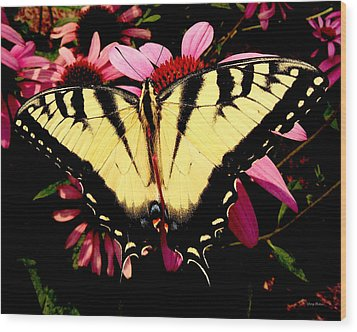 Wood Print featuring the photograph Swallowtail Butterfly On A Purple Coneflower by George Bostian