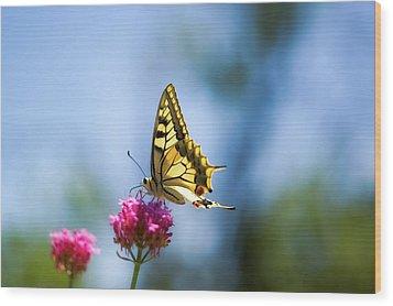 Swallowtail Butterfly On Pink Flower Wood Print by Alexandre Fundone