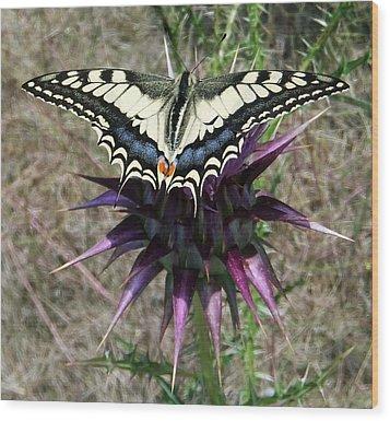 Swallowtail Wood Print by Eric Kempson