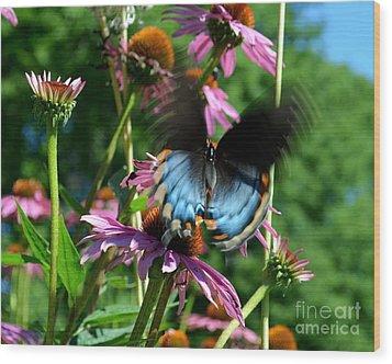 Swallowtail In Motion Wood Print by Sue Stefanowicz