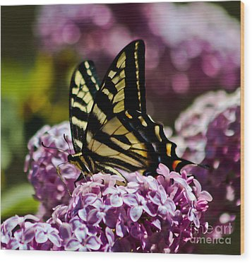Swallowtail On Lilac 2 Wood Print by Mitch Shindelbower