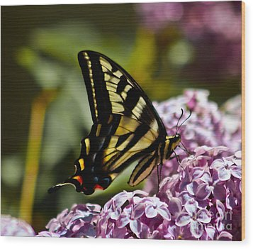 Swallowtail On Lilac Wood Print by Mitch Shindelbower