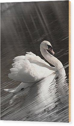 Swan 2 Wood Print by Nan Schefcick