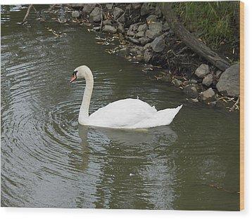 Swan Along The Shoreline Wood Print by Corinne Elizabeth Cowherd