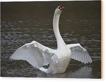 Wood Print featuring the photograph Swan Hugs by Brian Stevens