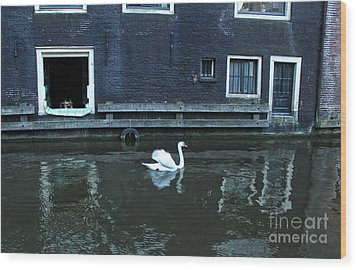 Swan In Amsterdam Canal Wood Print by Gregory Dyer